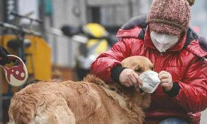 Chó cưng của bệnh nhân nCoV 'dương tính yếu' lần hai