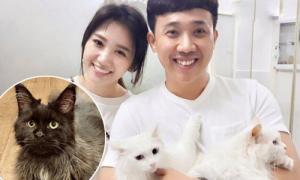 Chú mèo quý tộc 70 triệu đồng của vợ chồng Trấn Thành