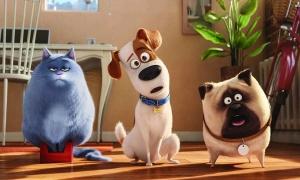 Ở nhà trốn dịch xem gì: 'Cười xỉu' với loạt phim hoạt hình thú cưng
