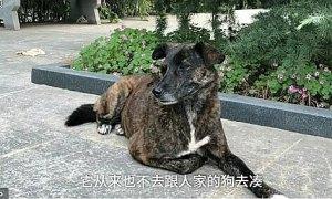 Chó bị bỏ rơi vẫn chờ chủ suốt 3 năm