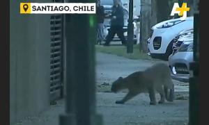 Động vật hoang dã 'xâm chiếm' đường phố trong Covid-19