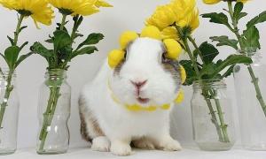 Mở bình chọn chung kết Your Cutest Pet
