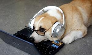 Your Cutest Pet tăng thêm 10 triệu đồng giá trị giải thưởng
