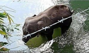 Bắt giữ nghi phạm nhét pháo vào trái cây làm chết voi mang thai