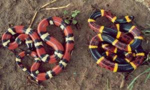 Con rắn nào có nọc độc?