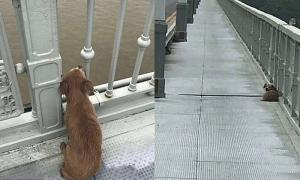 Chó đợi 4 ngày sau khi chủ nhảy cầu tự tử