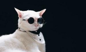 Căng mắt tìm nơi 'boss' mèo ẩn nấp (2)