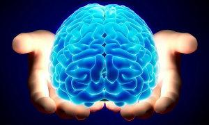 Bộ não có bao nhiêu phần trăm là nước?