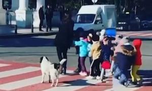 Chú chó giúp trẻ em sang đường an toàn