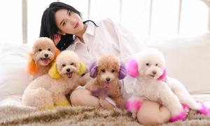 Đàn cún cưng trăm triệu đồng của Sĩ Thanh