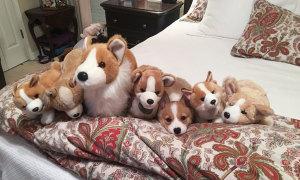 Thị lực 10/10 mới thấy các thú cưng đang chơi 'trốn tìm' (2)