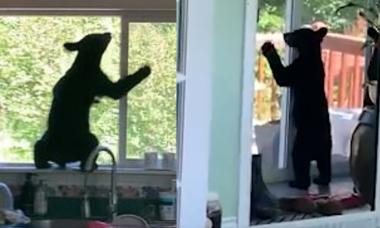Sốc khi phát hiện gấu đen đang quậy tung nhà
