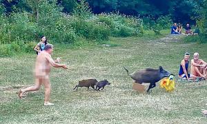 Khỏa thân đuổi theo lợn rừng... đòi laptop