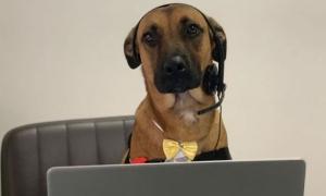 Chú chó lang thang 'kiếm được việc làm' nhờ kiên trì và chân thành