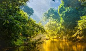 Rừng nhiệt đới Amazon có gì kỳ bí?