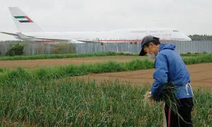 Lão nông sống giữa sân bay quốc tế Nhật Bản