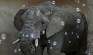 Vườn thú ở Ba Lan cho voi bị stress dùng cần sa y tế