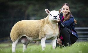 Chú cừu đắt nhất thế giới, hơn cả xe Ferrari và đồng hồ Rolex cộng lại