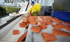 'nCoV trên cá hồi đông lạnh có thể tồn tại trong một tuần'