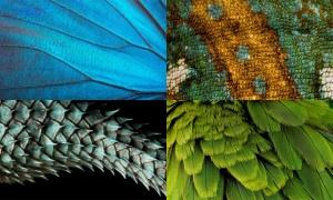 Zoom cận từng chi tiết bạn có đoán được đây là con gì?