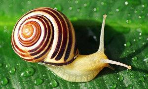Đố bạn biết con gì chậm hơn cả ốc sên?