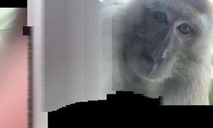 Khỉ 'trộm' điện thoại rồi selfie đầy kinh ngạc