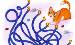 Tìm đường thoát khỏi mê cung giúp 'boss' mèo