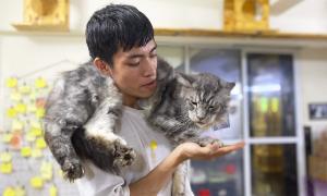 Bỏ học, chàng sinh viên Kiến trúc mở quán cà phê cứu hộ mèo