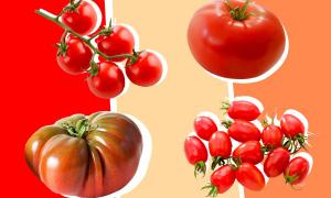 Cà chua là trái cây hay rau?