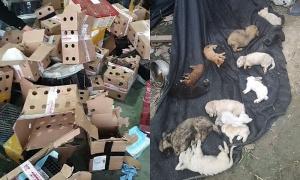 Hàng nghìn con vật 'đặt mua qua mạng' chết trong thùng carton chất đống lúc vận chuyển