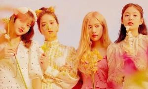 Thành tích kém, fan Black Pink đổ lỗi 'tại BTS, tại comeback quá nhiều'