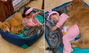Clip mèo và chó cưng ôm cô chủ nhỏ ngủ say sưa hút view