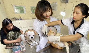 Những cô cậu sinh viên 'nhặt' chó mèo què quặt, ghẻ lở về cứu chữa