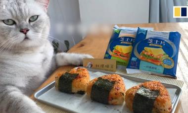Chú mèo 'biết nấu ăn' thành ngôi sao trên mạng xã hội Trung Quốc