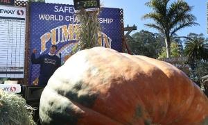 'Bí ngô vương' nặng hơn 1 tấn đón Halloween