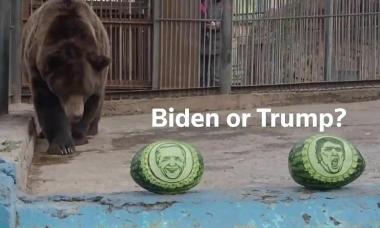'Tiên tri' hổ, gấu chọn Trump hay Biden thắng cử