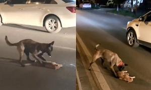 Khoảnh khắc gây xúc động: Chó kéo mèo bị xe tông lên vỉa hè