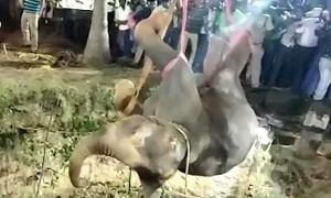 14 tiếng giải cứu voi ngã xuống giếng