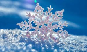 Nhanh mắt phát hiện bông tuyết Giáng sinh kỳ lạ