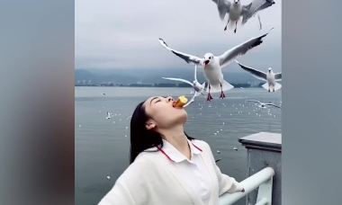 Du khách Trung Quốc cho mòng biển ăn bằng... miệng