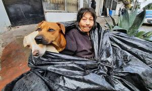Bà lão và 6 con chó sống chung trong một túi rác