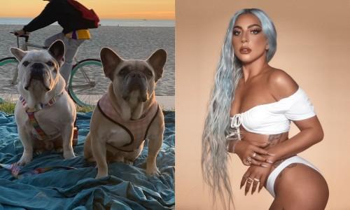 Lady Gaga đau lòng lên tiếng về hai cún cưng bị bắt cóc