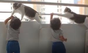 Chú mèo quyết ngăn đứa trẻ trèo khỏi lan can chung cư cao tầng