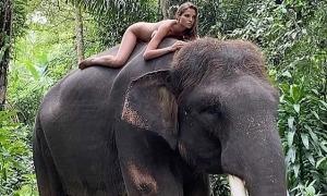 Hot girl người Nga khỏa thân nằm uốn éo trên lưng voi