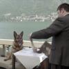 Cuộc sống siêu sang chảnh của chú chó giàu nhất hành tinh