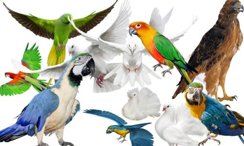 Loài chim nào sống lâu nhất?
