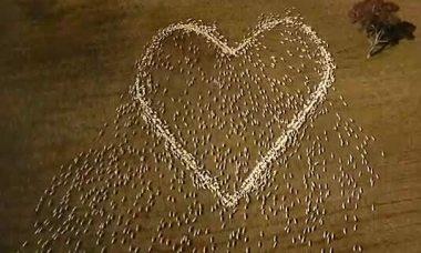 Vẽ trái tim cừu tưởng nhớ người dì đã mất